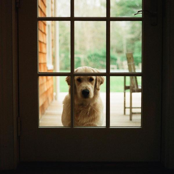 Фото №1 - Too cute: у собаки Шона Мендеса и Камилы Кабелло появился Инстаграм 🥰
