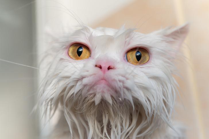 Фото №6 - 12 вещей, которые раздражают твоего кота