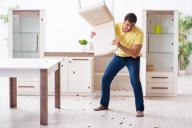 Как избавиться от тараканов и муравьев дома