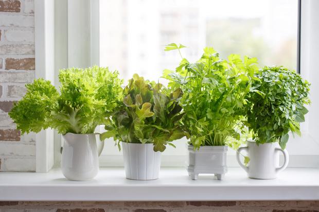 Фото №2 - Растения на кухне: 7 практичных идей