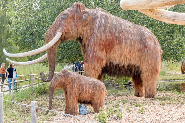 Фото №1 - Ученые задумались о возрождении мамонтов