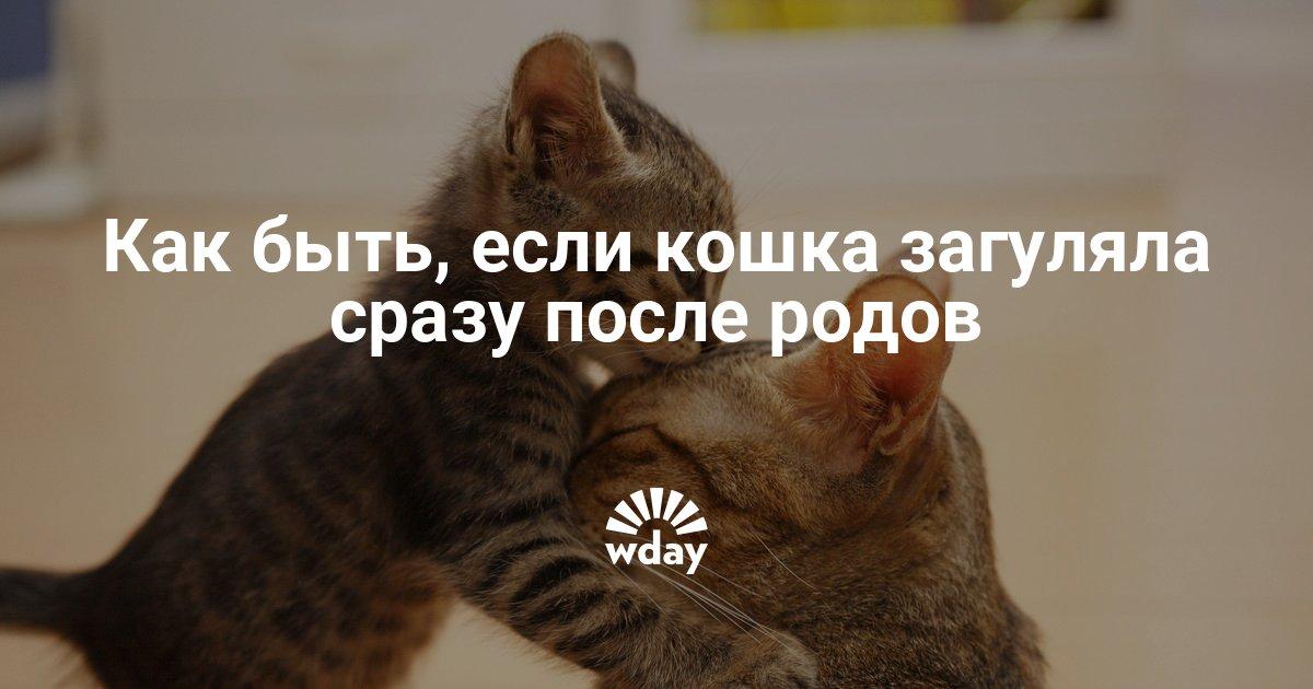 Когда и почему кошка начинает гулять после родов. Может ли кошка забеременеть сразу после родов Как скоро кошка забеременеть после родов