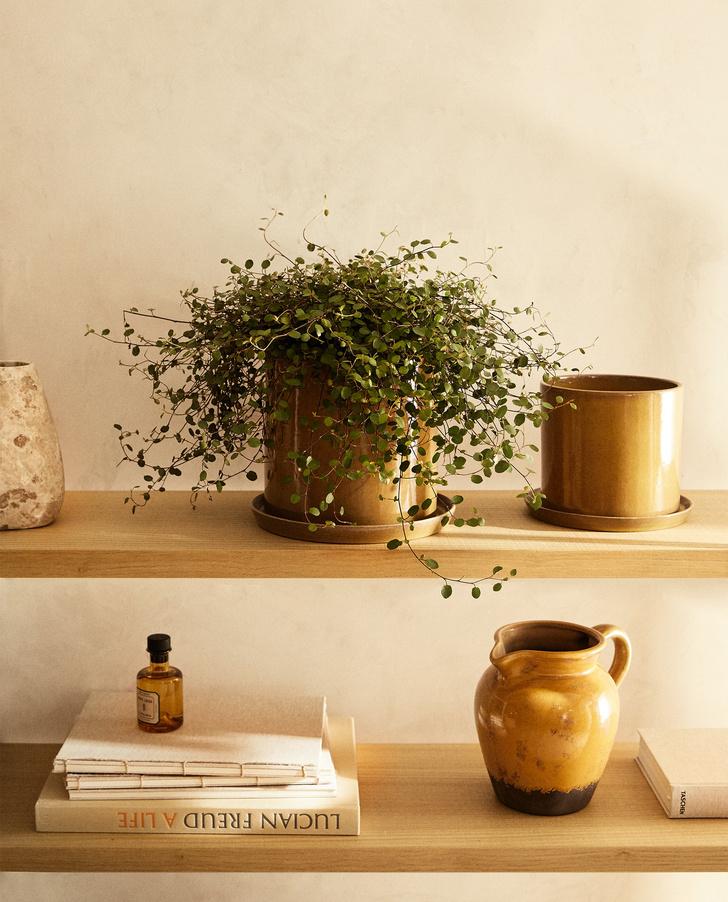 Фото №6 - Как правильно поливать комнатные растения: 5 советов