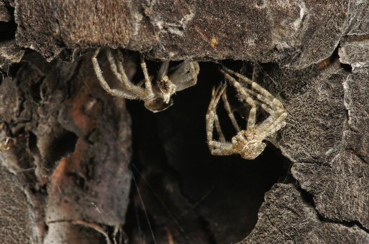Фото №1 - Зачем людям пауки? 3 удивительных причины