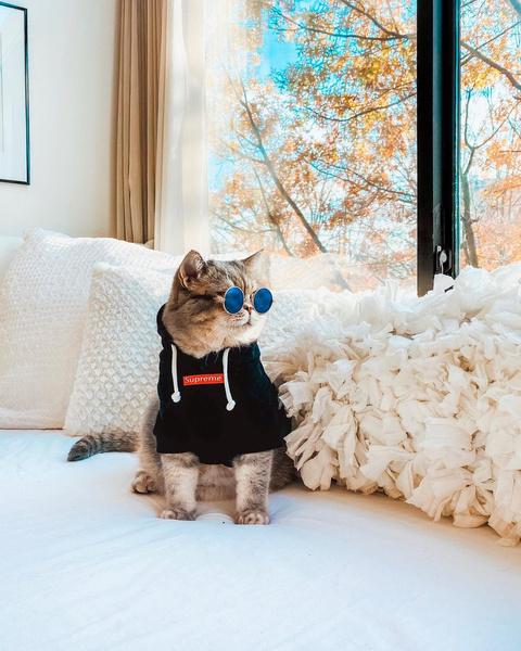 Фото №10 - Инста дня: Этот кот про моду знает больше, чем ты 😂
