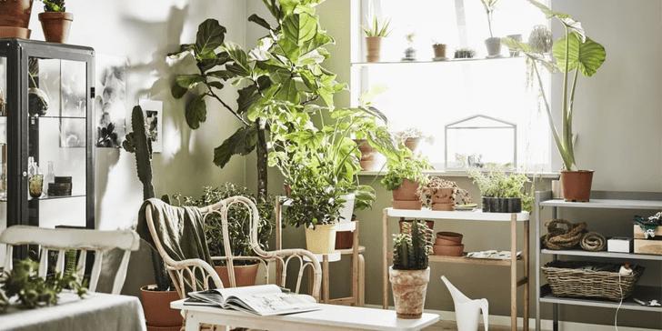 Фото №1 - Растения в интерьере: 7 идей для домашнего сада