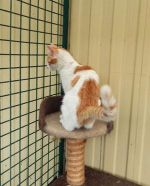 Фото №3 - Котопёс недели: кошка Мэгги и хаски Зима