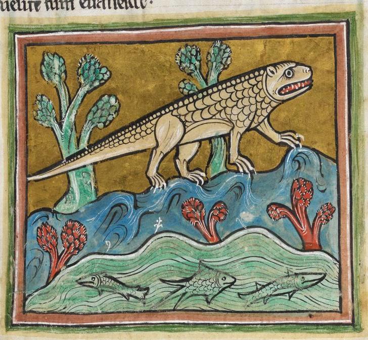 Фото №15 - Как в старину художники изображали животных, которых никогда не видели (25 странных существ)