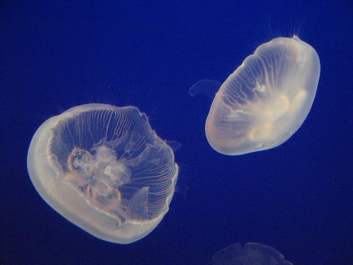 Фото №6 - Прозрачные, как стеклышко: настоящие призраки из мира животных