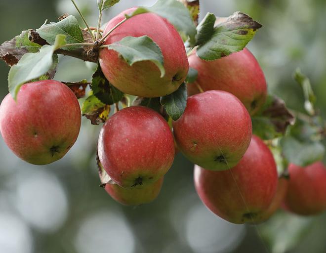 Печеные яблоки в аэрогриле