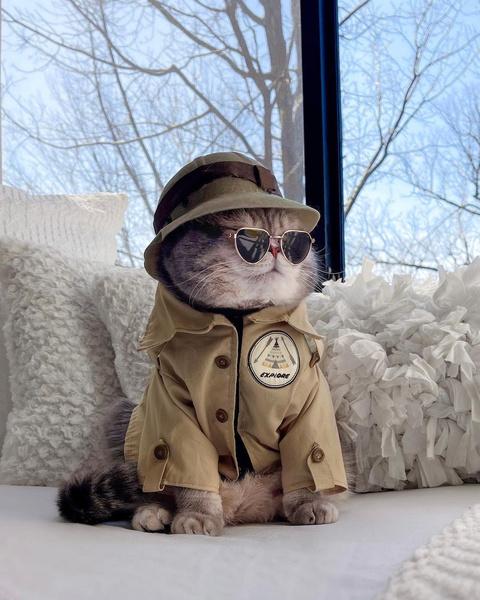 Фото №21 - Инста дня: Этот кот про моду знает больше, чем ты 😂