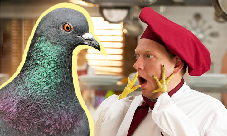 Фото №1 - Можно ли съесть уличного голубя