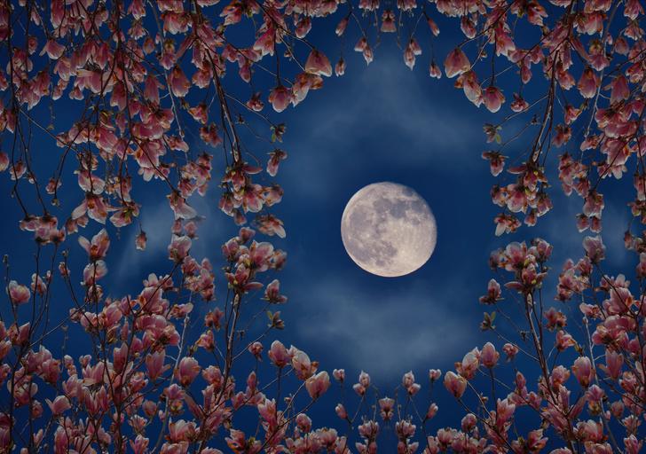 Фото №2 - Цветочная Суперлуна: когда наступит и что принесет самое особенное полнолуние в году