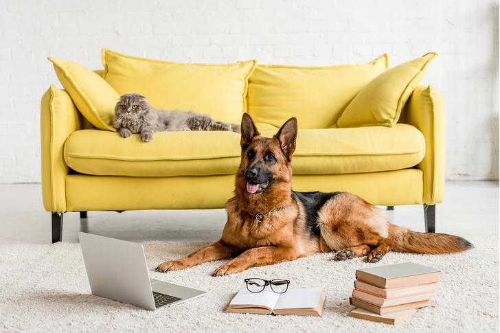 Фото №1 - 13 декабря заходи на онлайн-выставку собак и кошек из приютов