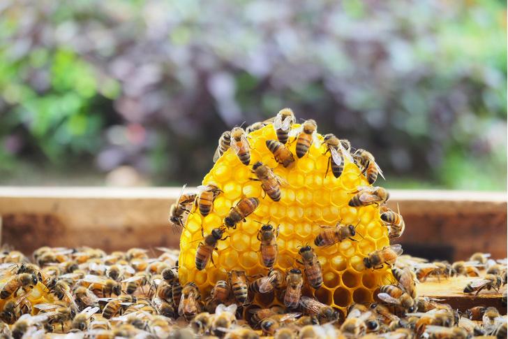 Фото №3 - Как напиваются насекомые, птицы и животные