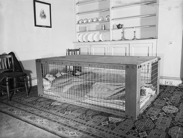Фото №12 - 8 гениальных изобретений своего времени, которые сейчас выглядят нелепо