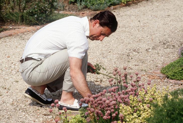 Фото №7 - Дачники Голливуда: 18 звезд, которые любят работать в саду