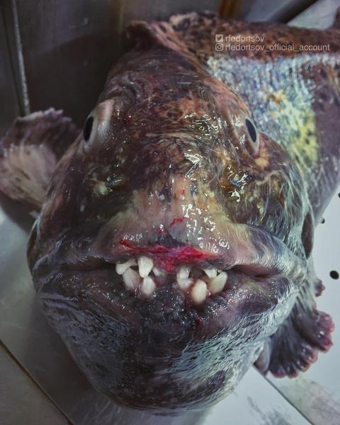 ужасная рыба
