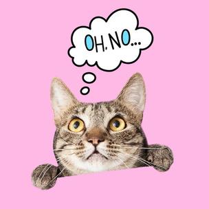 Фото №6 - Тест: Выбери мартовского котика и узнай, сколько человек безответно в тебя влюблены