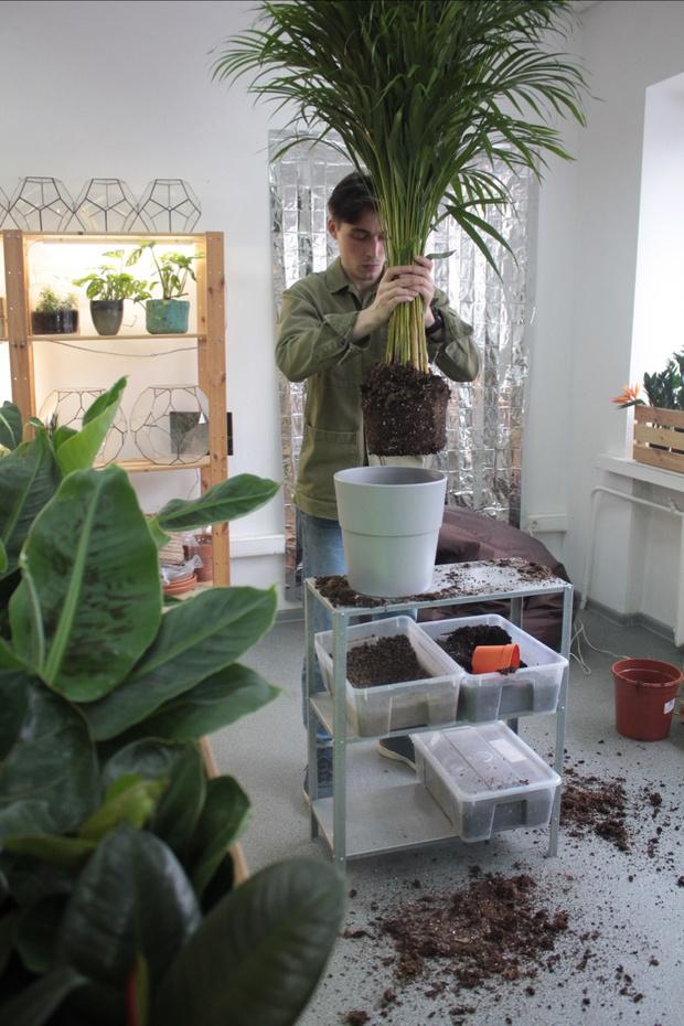 Фото №7 - С чего начать озеленение квартиры: советы эксперта