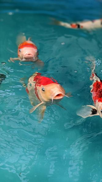 Фото №4 - К чему снится рыба: что говорят сонники и психологи