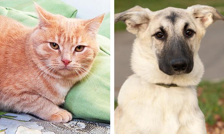 Фото №1 - Котопес недели: кот Персик и пес Буч