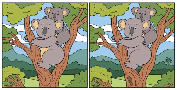 Фото №1 - Тест на глазастость: Сможешь найти 10 различий на этих картинках с коалами?