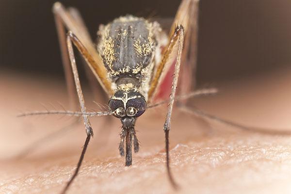 Фото №1 - Как защитить ребенка от летних насекомых