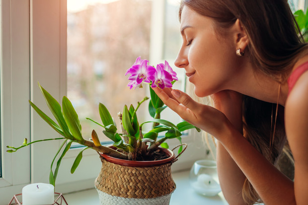 Фото №1 - Практическая магия: какие растения сажать для любви и богатства