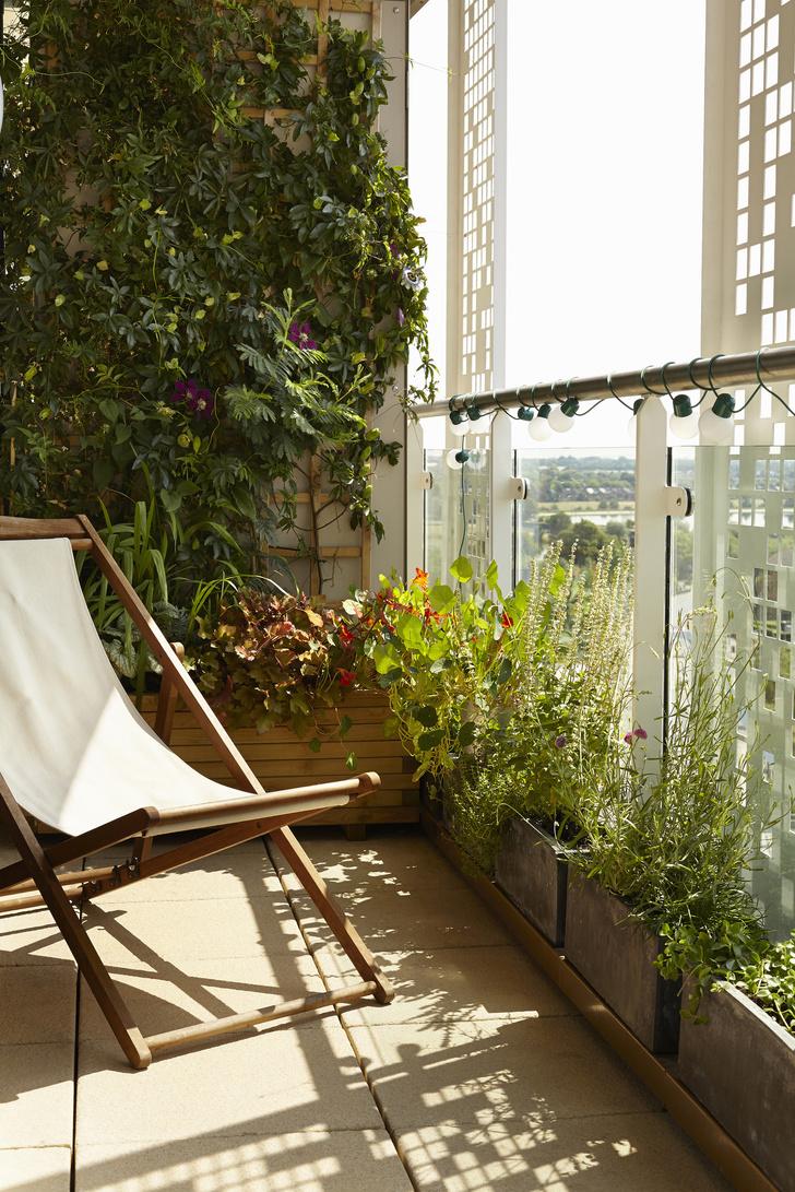 Фото №2 - Вертикальный сад: 7 оригинальных идей