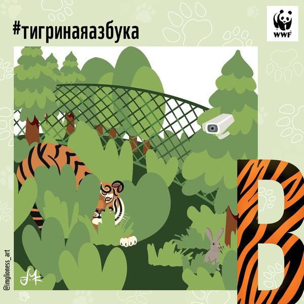 Фото №5 - Тигриная азбука: спасем амурского тигра вместе!