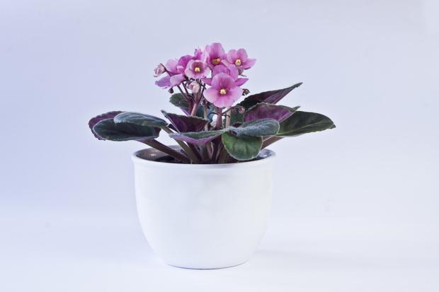 Фото №6 - Кактус цветет к деньгам: как гадать на комнатных растениях