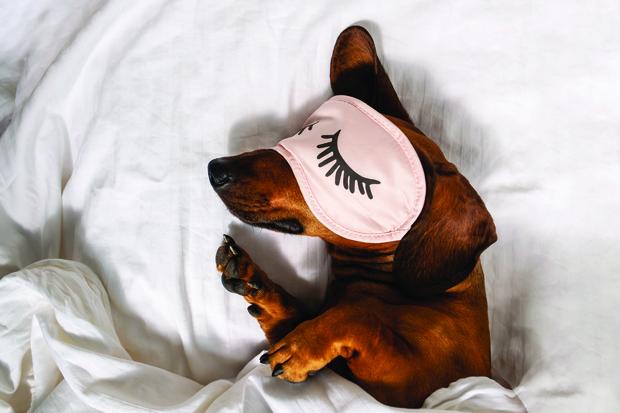 Фото №1 - Им так удобно? 20 собак, уснувших в очень странных позах
