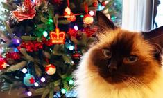 Кошки против елок: 25 милейших попыток отменить Новый год