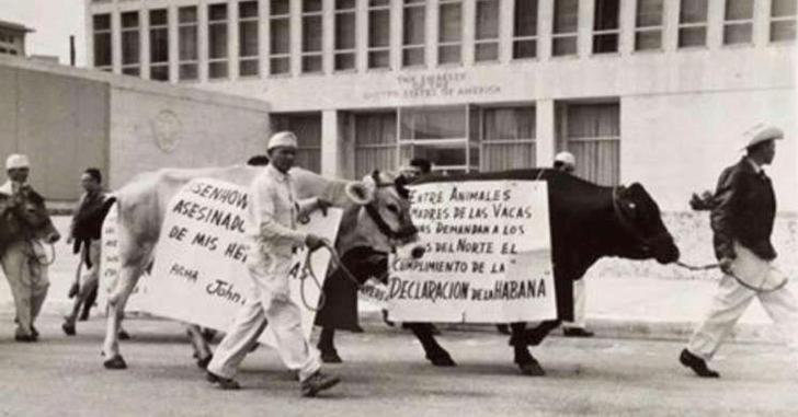 Фото №3 - Как американцы обломком космической ракеты убили кубинскую корову