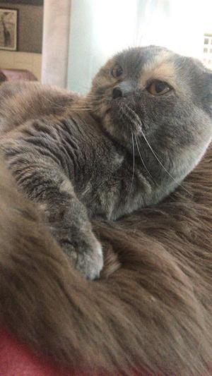 Фото №7 - Кто сказал «мяу»: Варум, Чиповская, Свиридова о любимых кошках