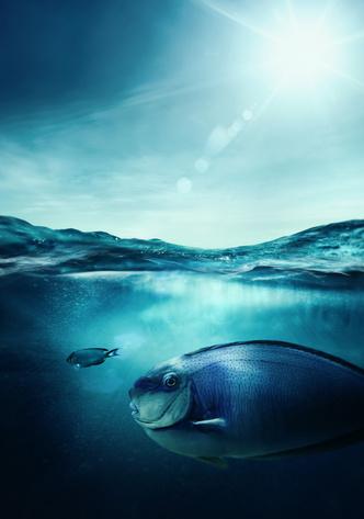 Фото №1 - К чему снится рыба: что говорят сонники и психологи
