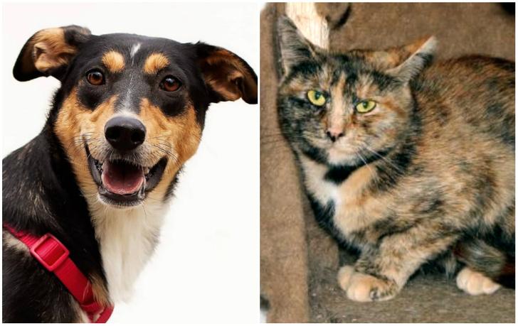 Фото №1 - Котопёс недели: кошка Тыковка и собака Молли