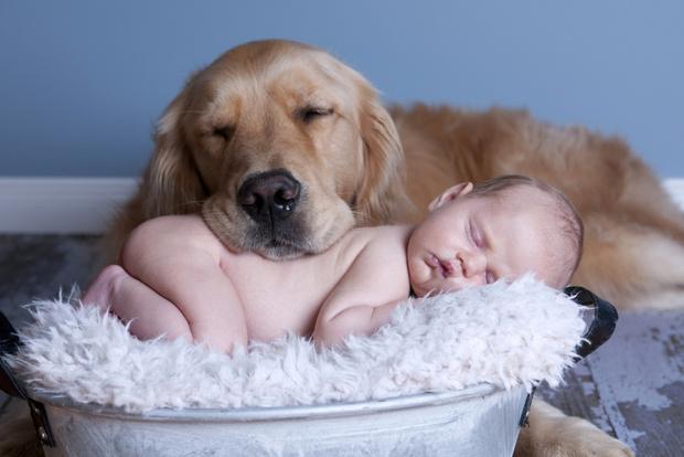 Фото №1 - Чем опасны домашние животные для маленьких детей?