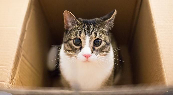 Почему кошки так любят коробки? Ответ зоопсихолога
