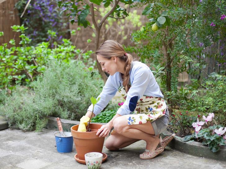 Фото №1 - 5 типичных ошибок при оформлении сада (и как их избежать)