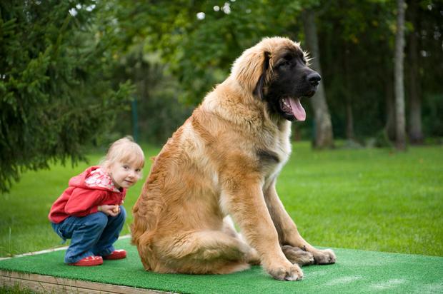 Как отказать ребенку в покупке собаки