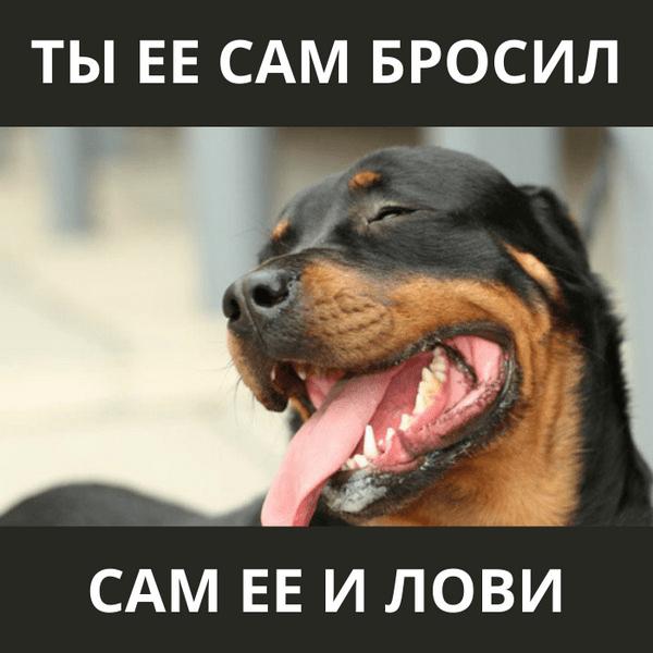 Фото №5 - Милота и угар: 20 дико ржачных мемов про животных