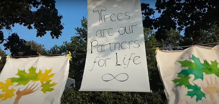 Фото №3 - Когда муж— бревно: в Англии девушки массово выходят замуж за деревья