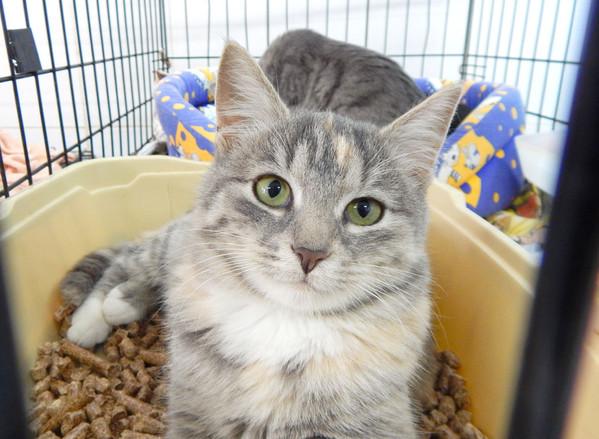 Фото №1 - Котопёс недели: кошка Мэри и собака Арлет