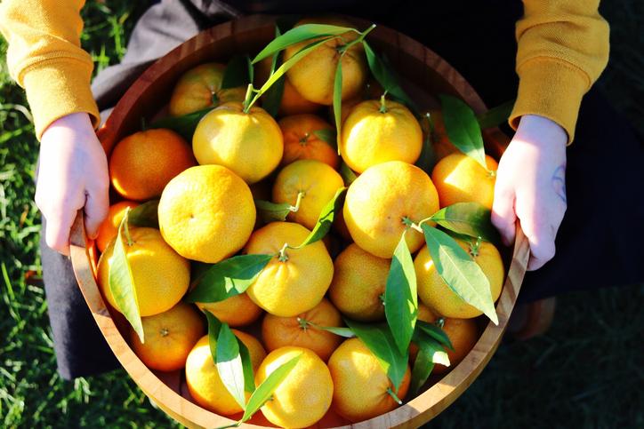 Фото №1 - Гид по мандаринам:учимся различать сорта!
