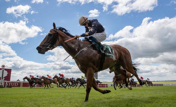 Фото №1 - Сколько в лошади лошадиных сил?