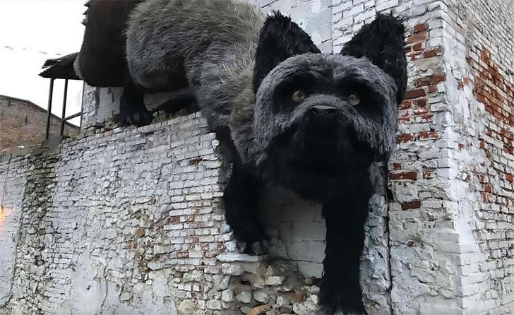 Фото №2 - По стенам Риги ползает гигантская лиса