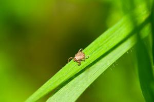 Фото №1 - Защита от клещей