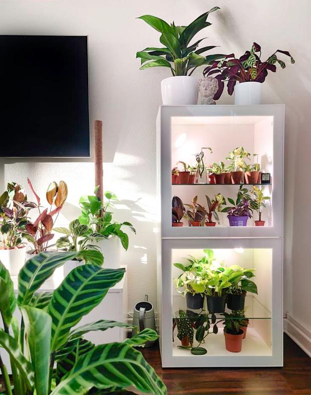 Фото №13 - Лучшие растения для спальни: советы по выбору и уходу